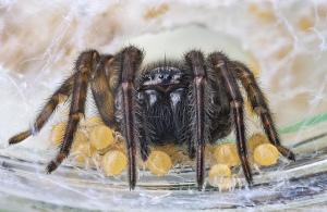 Народные средства от пауков