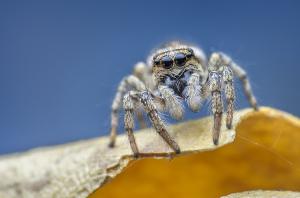 Способы борьбы с пауками