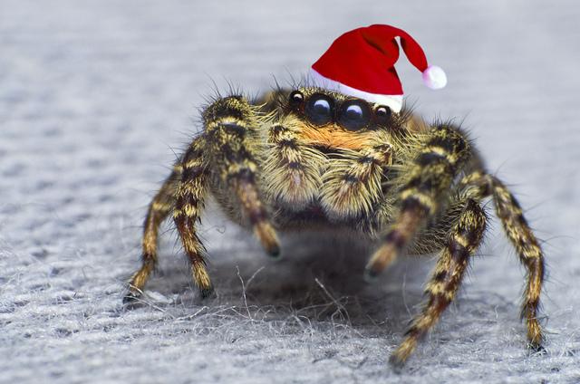 Возможный вред от пауков