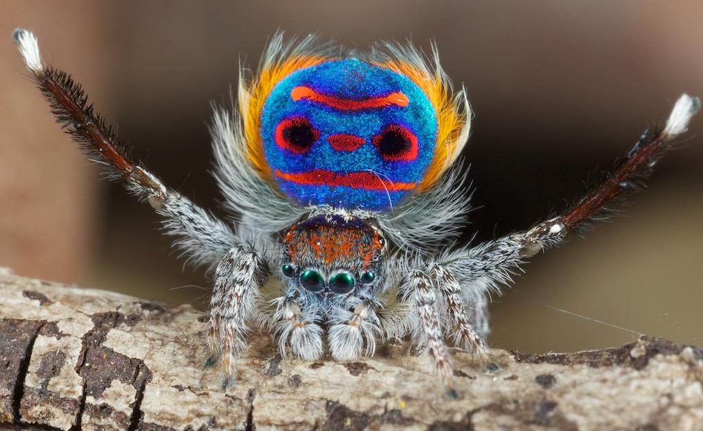 Посмотрите, какой красивый паук.