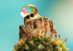 Посмотрите, какой милый паук.