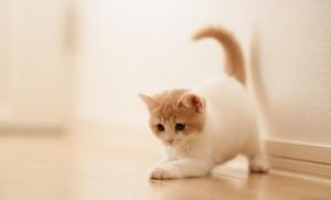 Маленькие котята больше всего страдают от блох