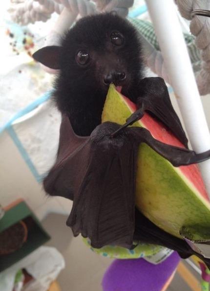 мышь ест фрукт