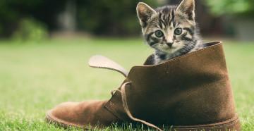 Как избавиться от запаха кошачьей мочи в обуви