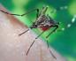 Как избавиться от зуда от укуса комаров