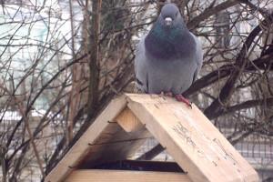 кормушка для голубя