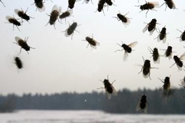как избавиться от мух в домашних условиях