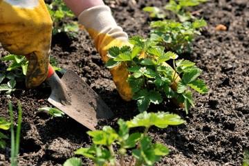 лунный календарь огородника на май 2016 года посадочные дни
