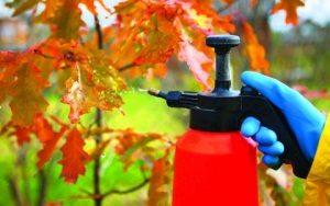 Как и чем обрабатывать сад осенью?