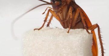 домашние насекомые в квартире фото и названия