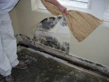 Как избавится от грибка на стенах