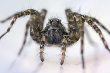 Как избавиться от пауков в квартире?