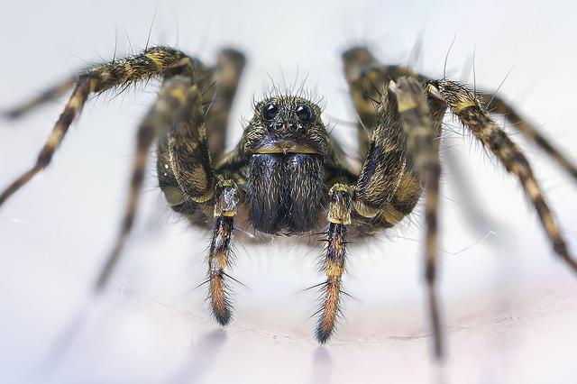 В квартире много пауков к чему это