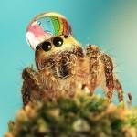Приметы о пауках