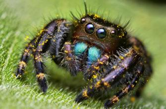 Приметы о пауках в квартире - верить или игнорировать?