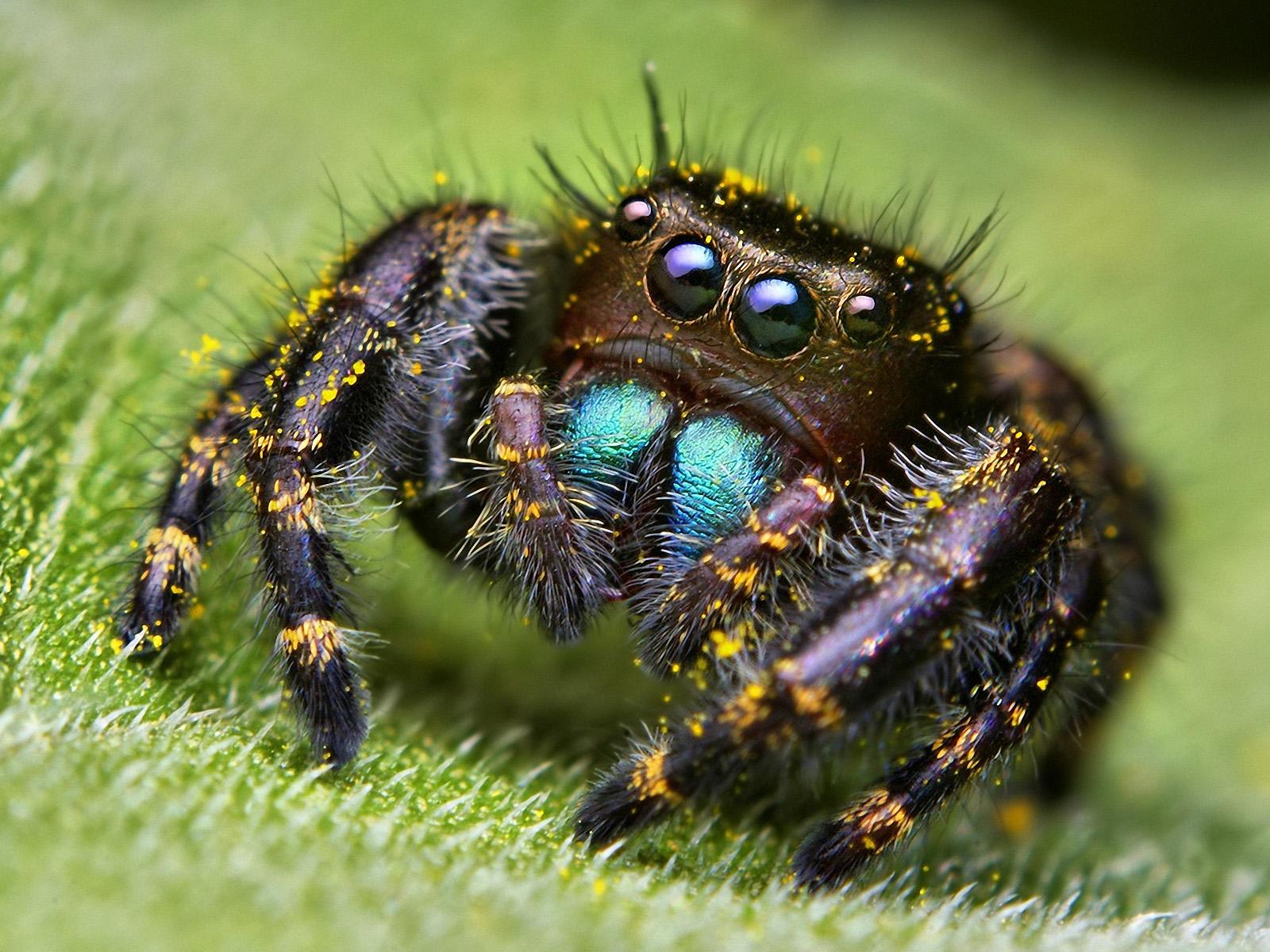 Примета паук в доме и ее значение у наших предков
