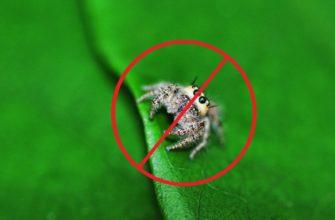 Средства от пауков