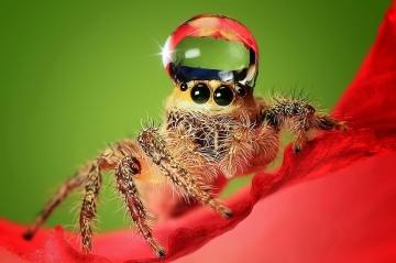 Боязнь пауков - арахнофобия, как избавиться от страха?