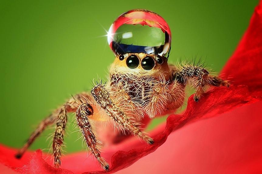 Арахнофобия: как избавиться от боязни пауков