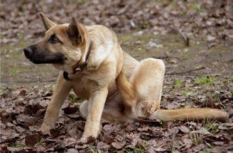 Как избавиться от блох у собак и щенков