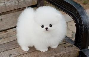 Как вывести блох у собак и щенков