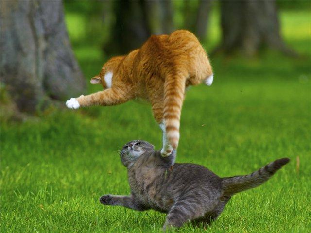 Кошки могут принести блох с улицы