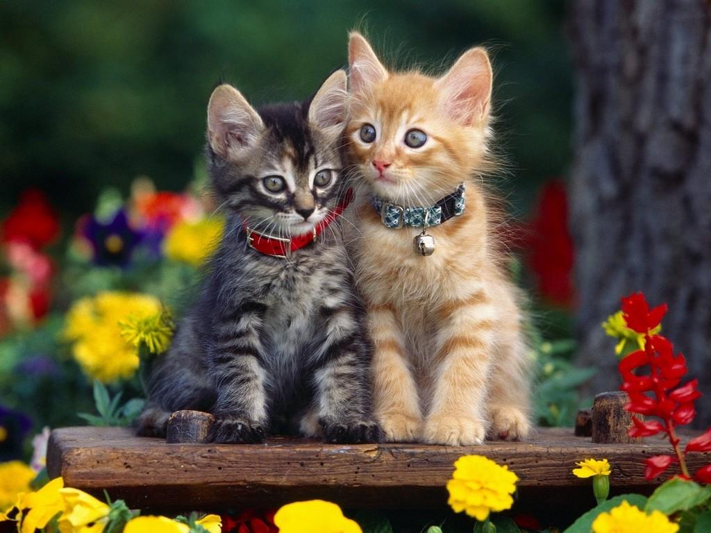 Совсем маленькие милые котятки