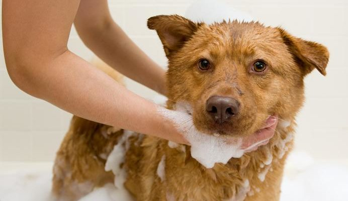 Средства от блох для собак и щенков