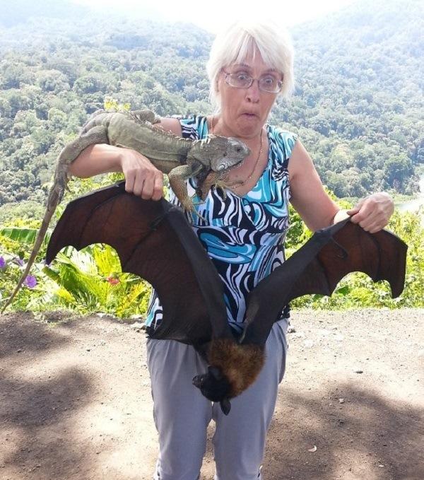 Смешная фотография с крыланом и игуаной