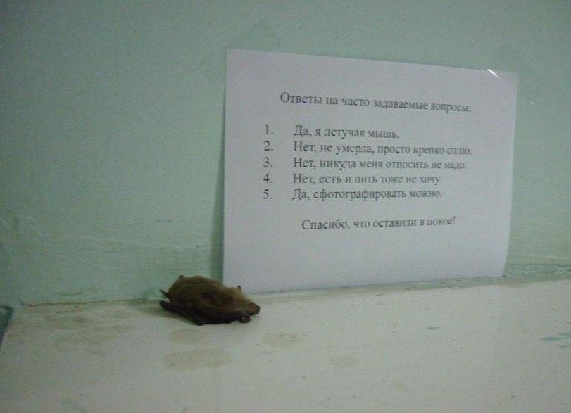 Юмор с летучей мышкой