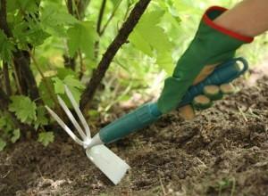следует применять перекопку и рыхление почвы