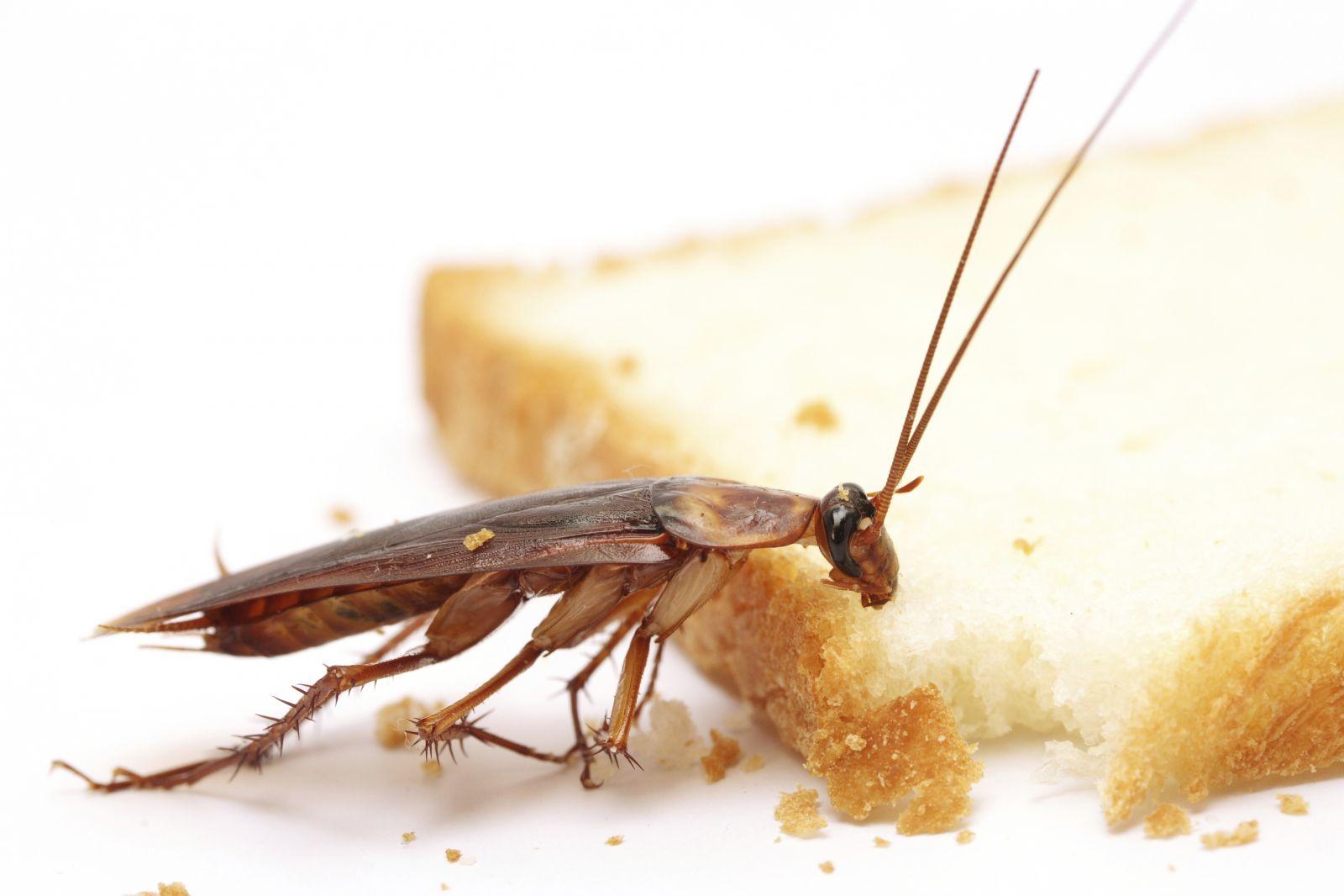 Как вывести тараканов из общежития