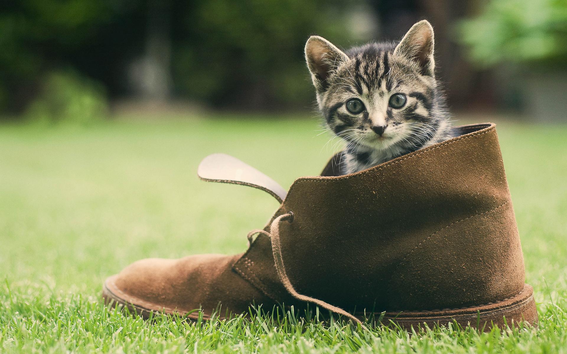 Кошка написала в обувь как избавиться от запаха