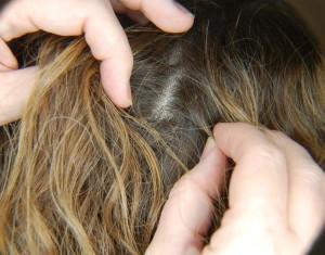 ищем вшей в волосах