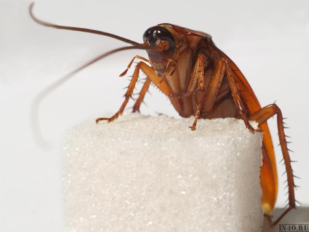 Какие насекомые могут жить в квартире. Домашние насекомые в квартире