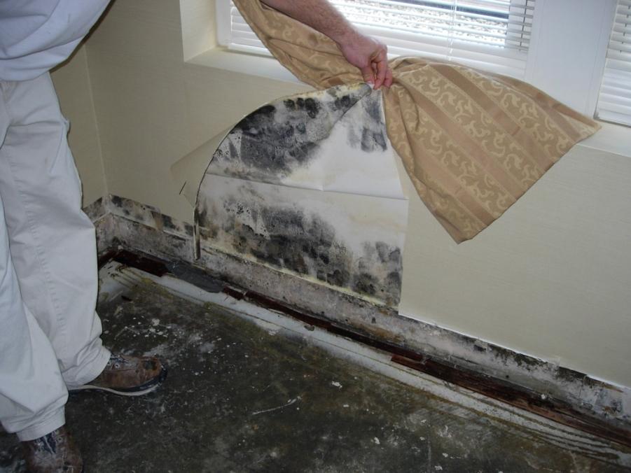 Как избавиться от плесени на стенах в квартире своими руками: средства народные и химические