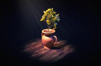плесень в цветочном горшке как избавиться; плесень в цветочном горшке; плесень на земле в цветочных горшках; земля в горшке покрылась белой плесенью; плесень в горшках комнатных цветов; как избавиться от плесени в цветочных горшках;