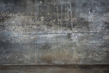 Как избавиться от плесени в подвале, подполье и на фундаменте, в доме и гараже